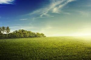 djungel och fält av gräs foto