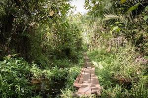 vandringsled in i djungeln foto