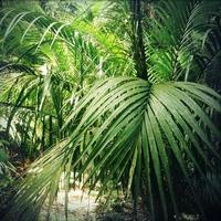 djungel foto