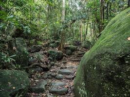 djungel gångväg foto