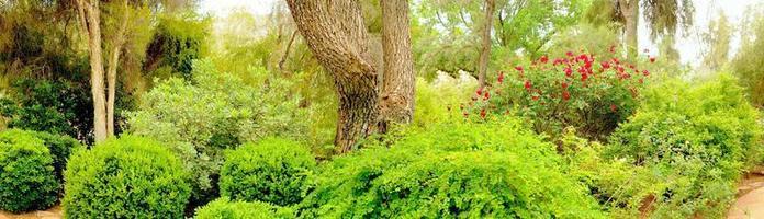 djungelträdgård foto