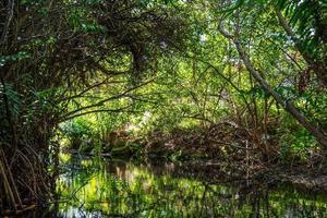 djungelgrön foto