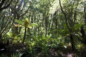 djungeln i fjordland foto