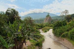 i djungeln foto