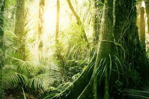 tropisk djungel