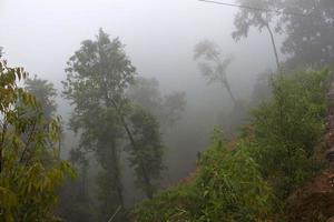 djungel i mornig dimma foto