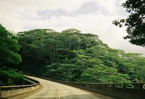 hawaii djungel väg foto