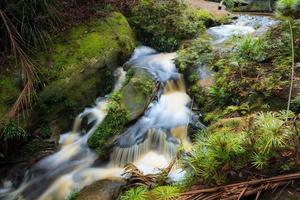 litet vattenfall i djungeln