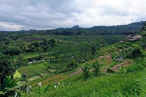 landskap med risfält och djungel, bali foto