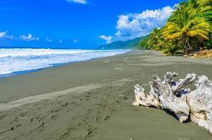vild strand på corcovado djungeln i Costa Rica foto