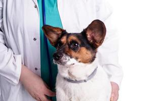 veterinär med hund foto