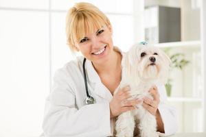 hos veterinären foto