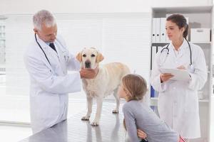 veterinärmedarbetare som undersöker en hund med sin ägare foto