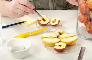 upptäckt av råtta inuti äpplet foto