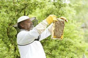 apiarist som arbetar med bin foto