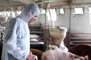 veterinär - skydd mot kontaminering foto