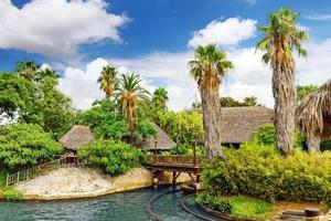 vackert landskap av tropisk djungel. foto