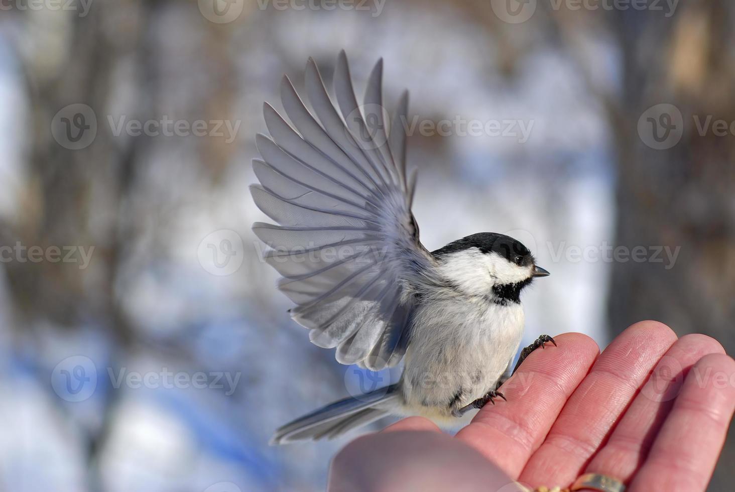 vogel in de hand foto