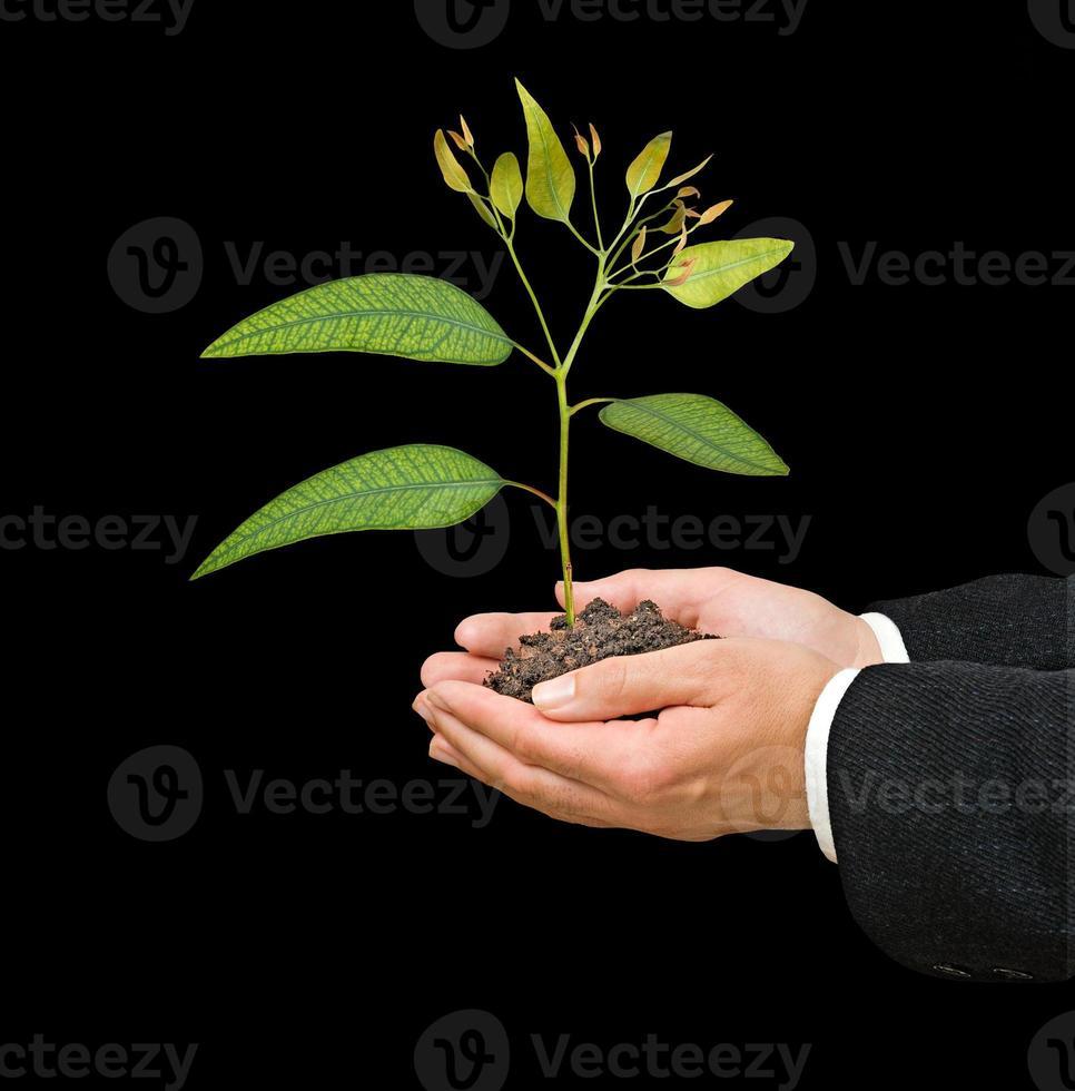 jong boompje als symbool van natuurbescherming foto