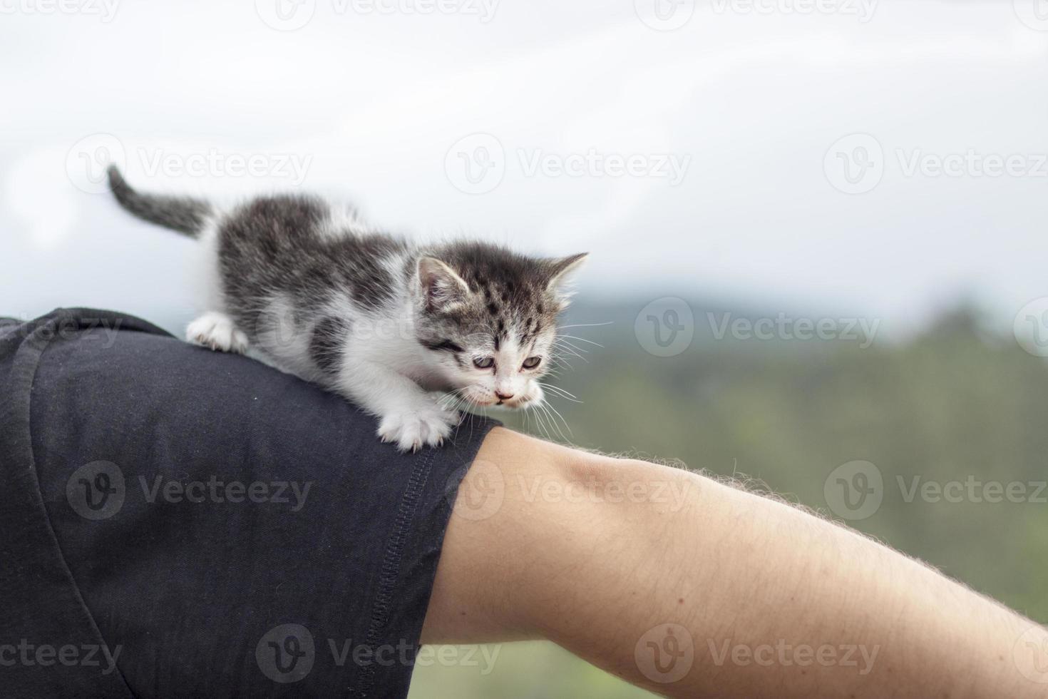 kat wandelen foto