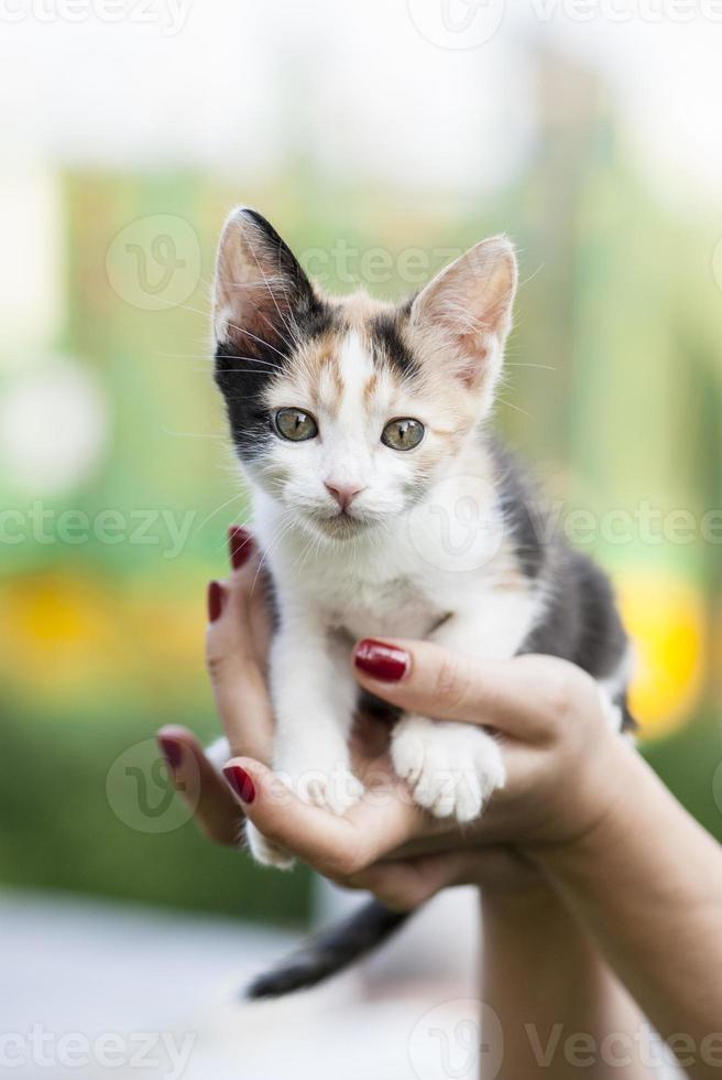 schattige kleine kat in handen foto