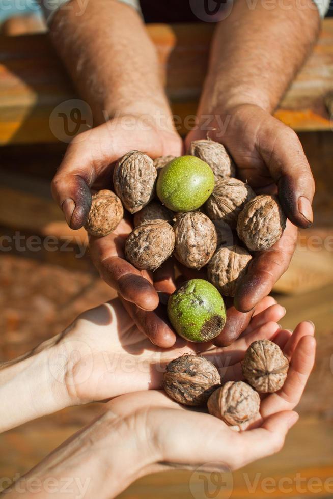 walnoten in handen van de mens foto