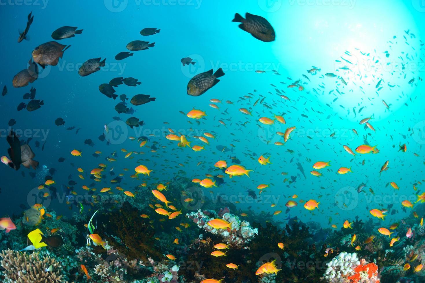 prachtige oceaan en vissen foto