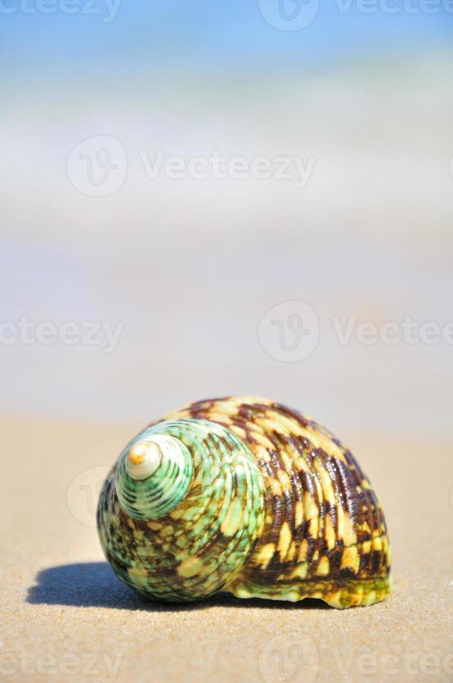 zeeschelp op het strand foto
