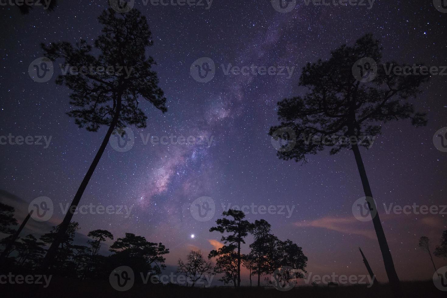 silhouet van boom met Melkweg op een nachtelijke hemel foto