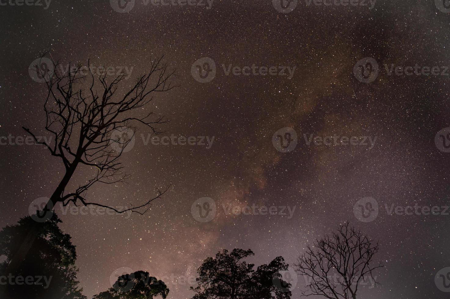 astrofotografie ster paden met droge boom over bos. foto
