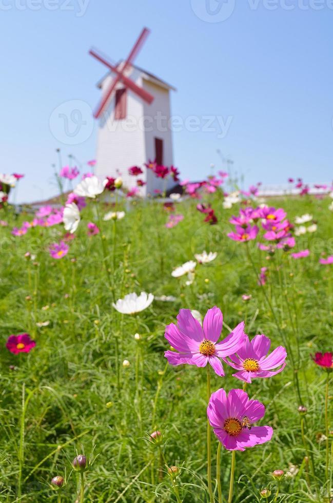 daisy flower met wind wiel achtergrond foto