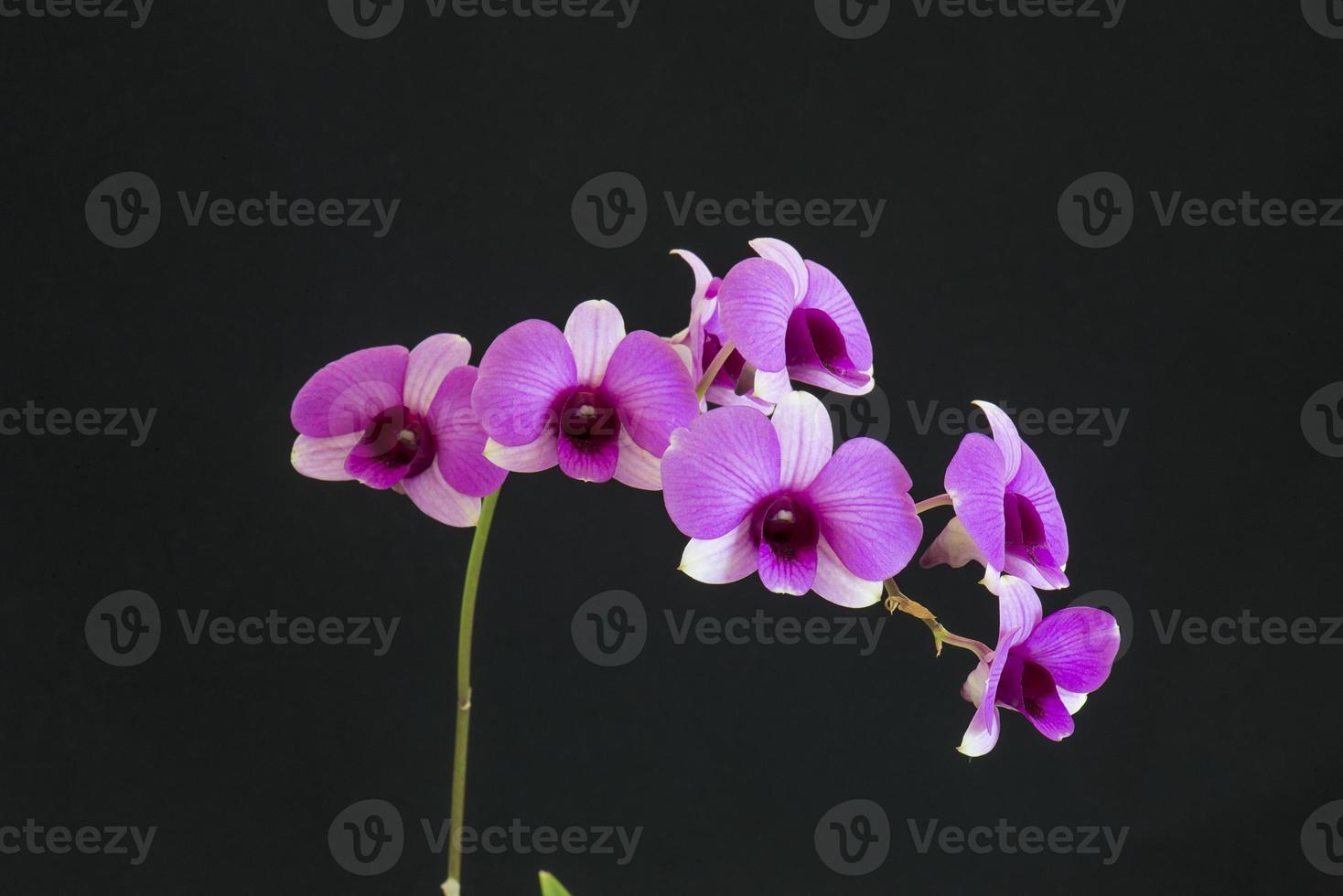 orchideeën op een zwarte achtergrond foto