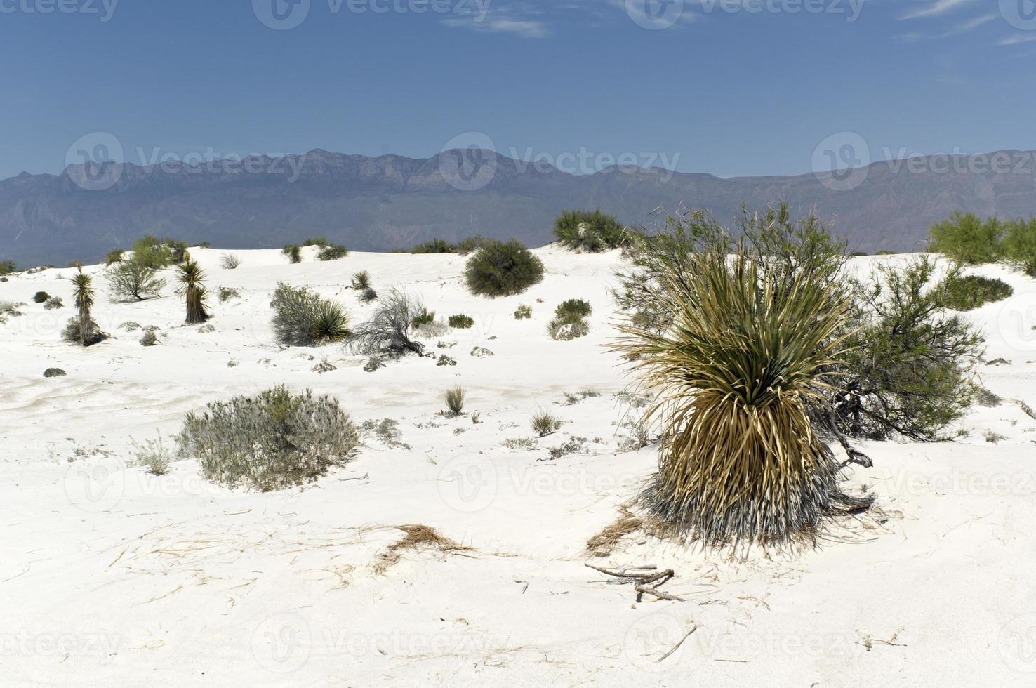 woestijn foto