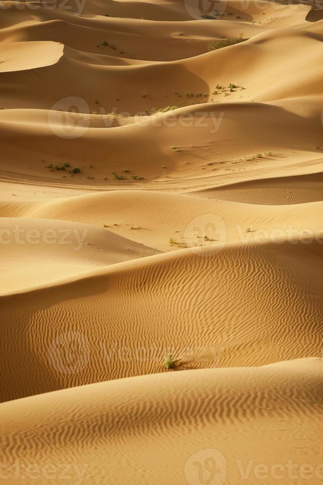 de Sahara woestijn foto