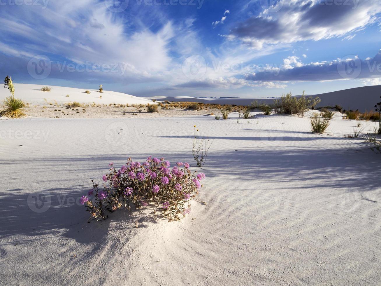 woestijn aard foto