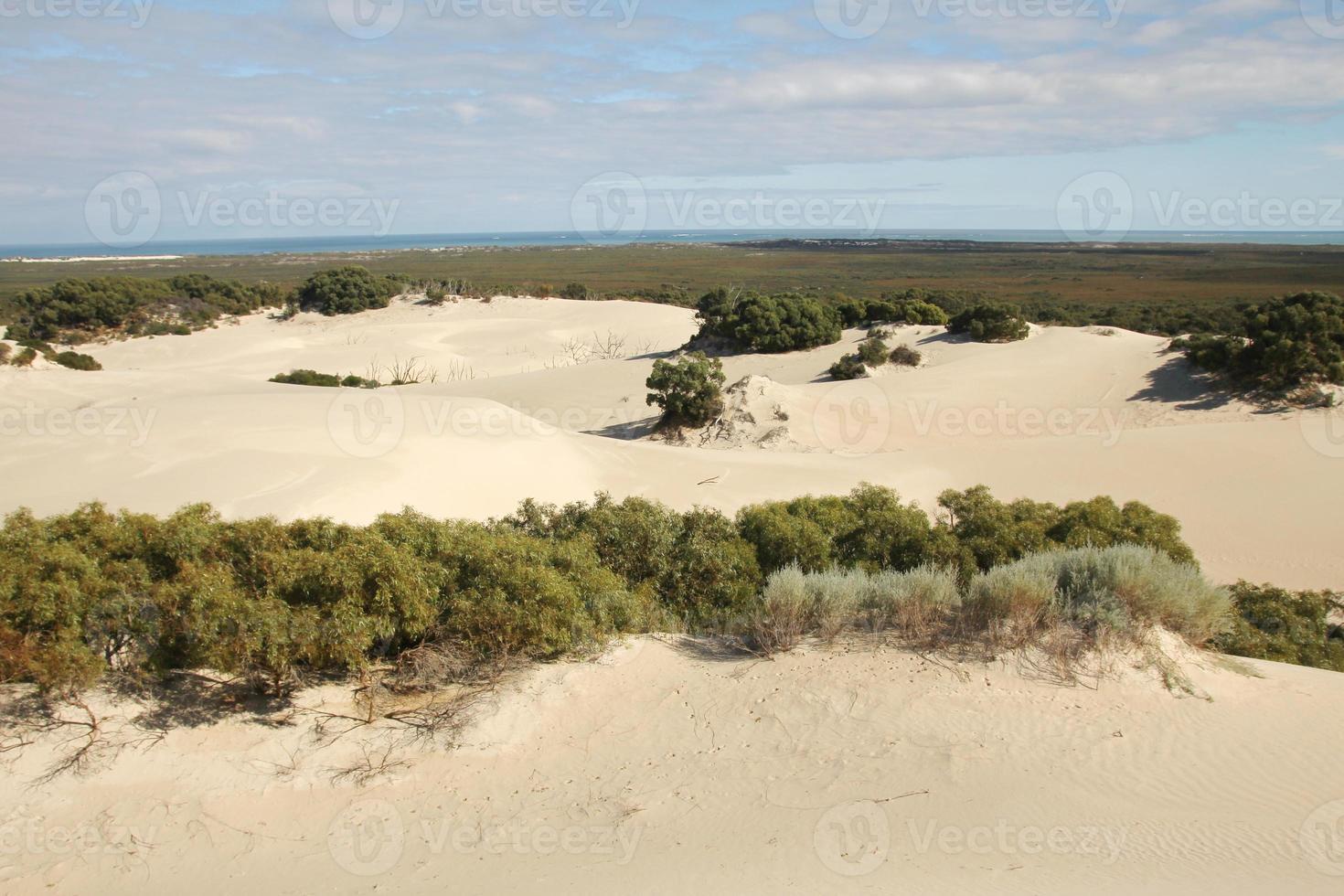 de woestijn foto