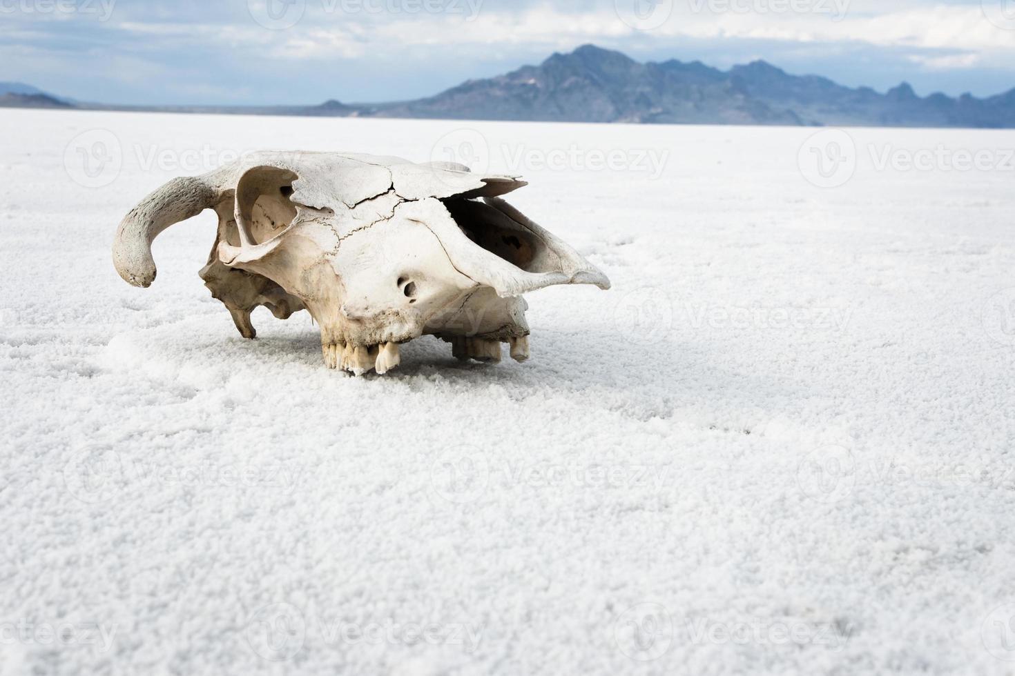 woestijn schedel foto