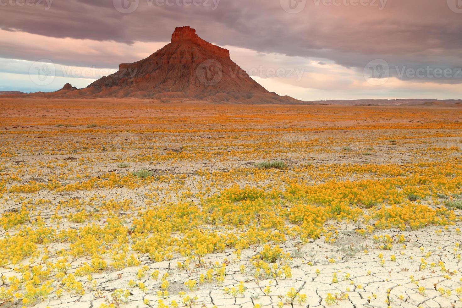woestijn wilde bloemen foto
