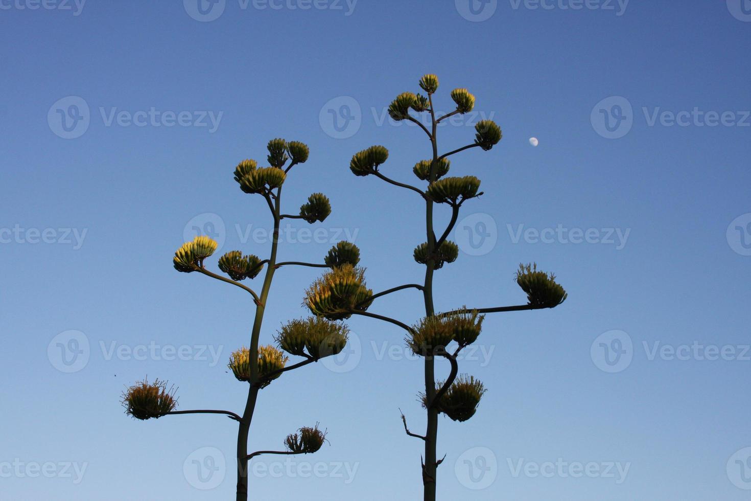 woestijnplanten foto