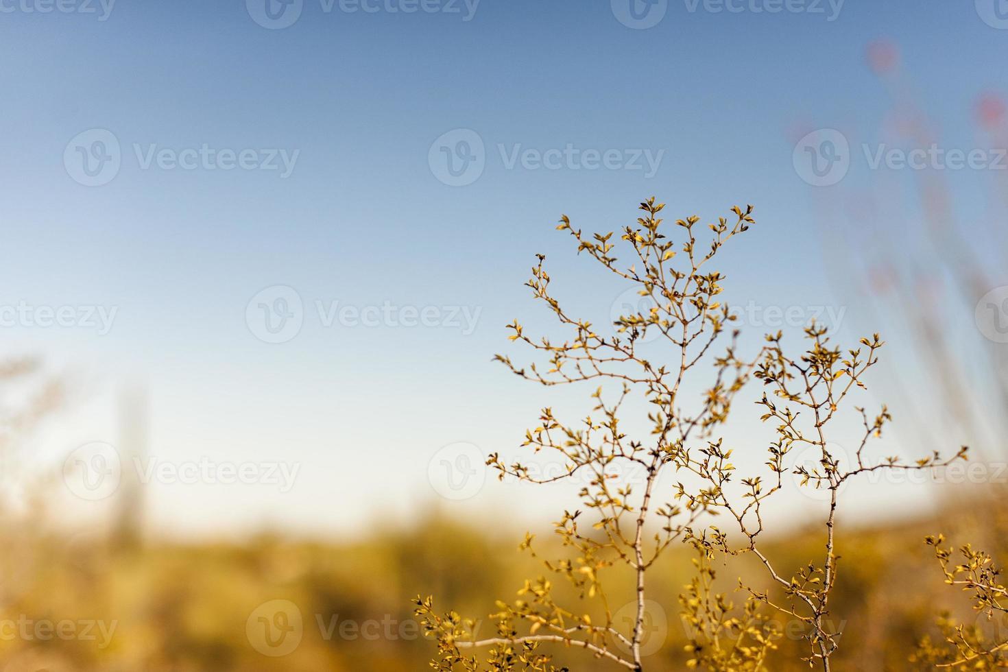 woestijn verwarmt foto