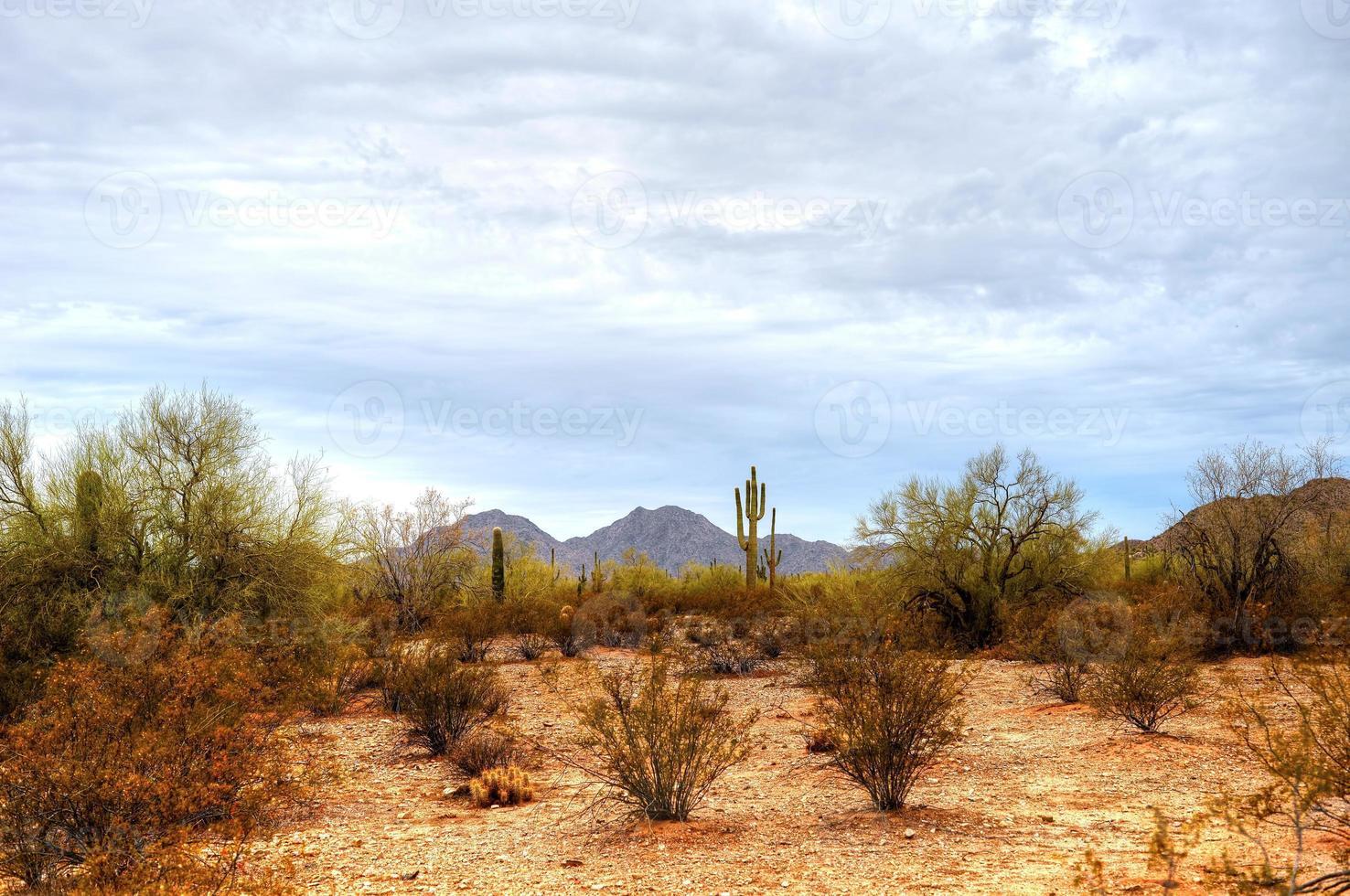 Sonora woestijn foto