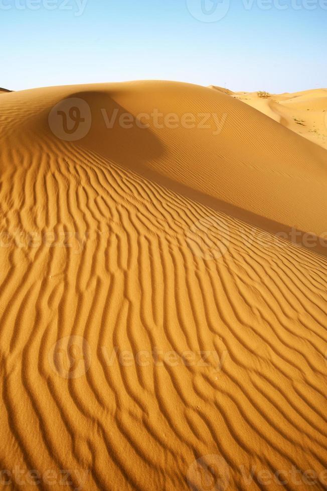 de woestijnkamelen foto