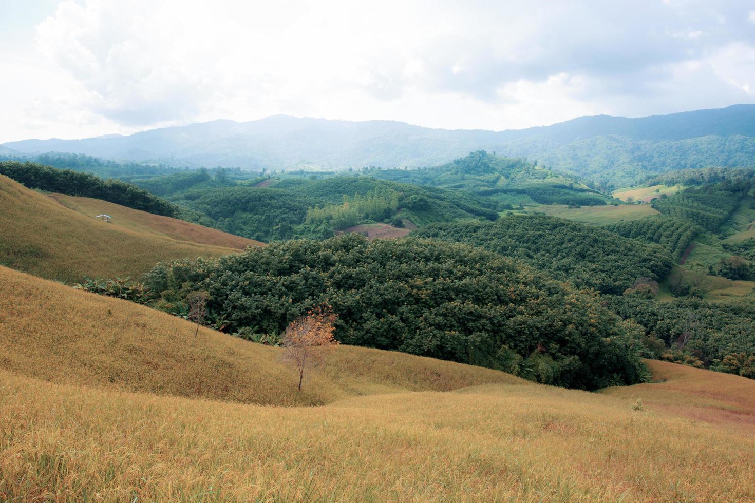 rijst veld op heuvelachtige landbouwgrond landschap foto
