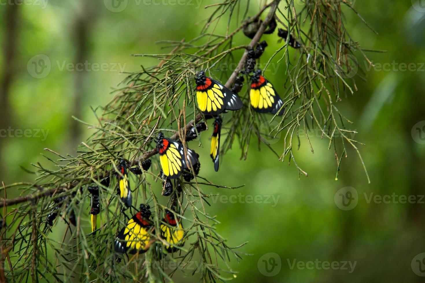mooi nieuw leven van vlinder. foto