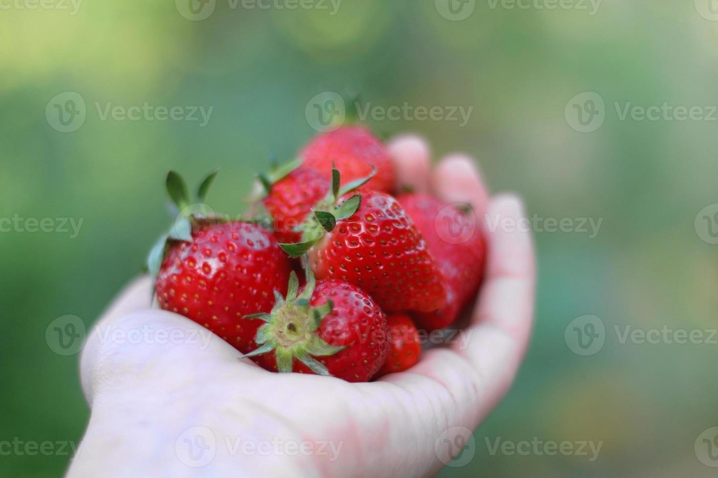 hand met aardbeien foto