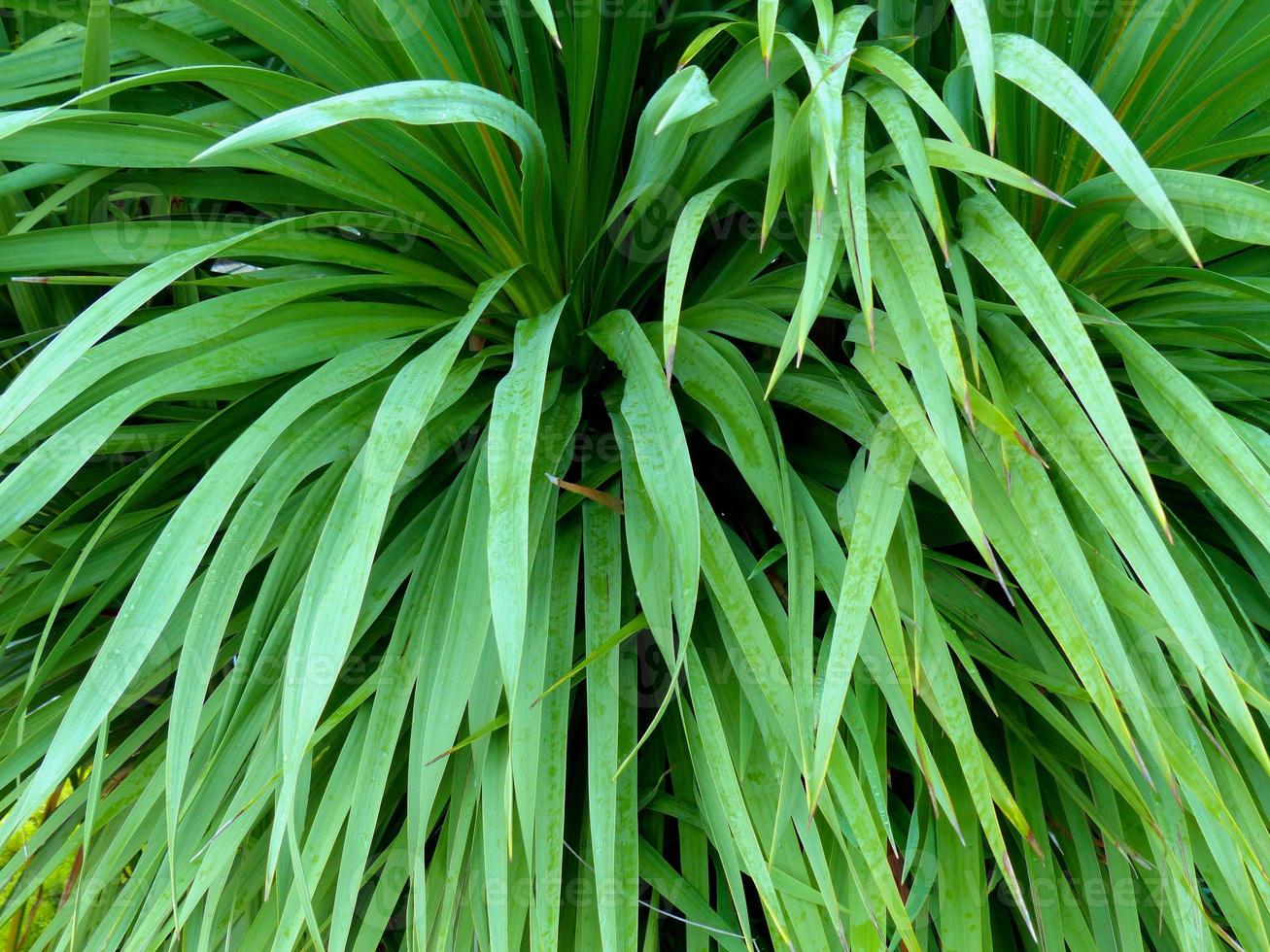 groene plant foto