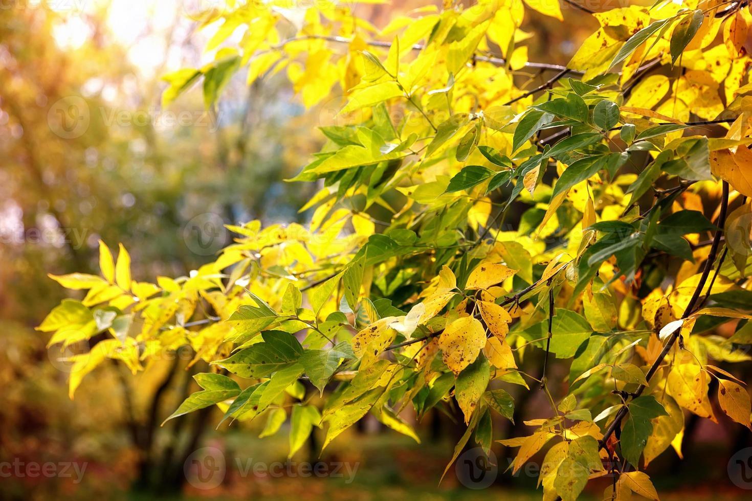 bladeren vallen takken dagzon foto