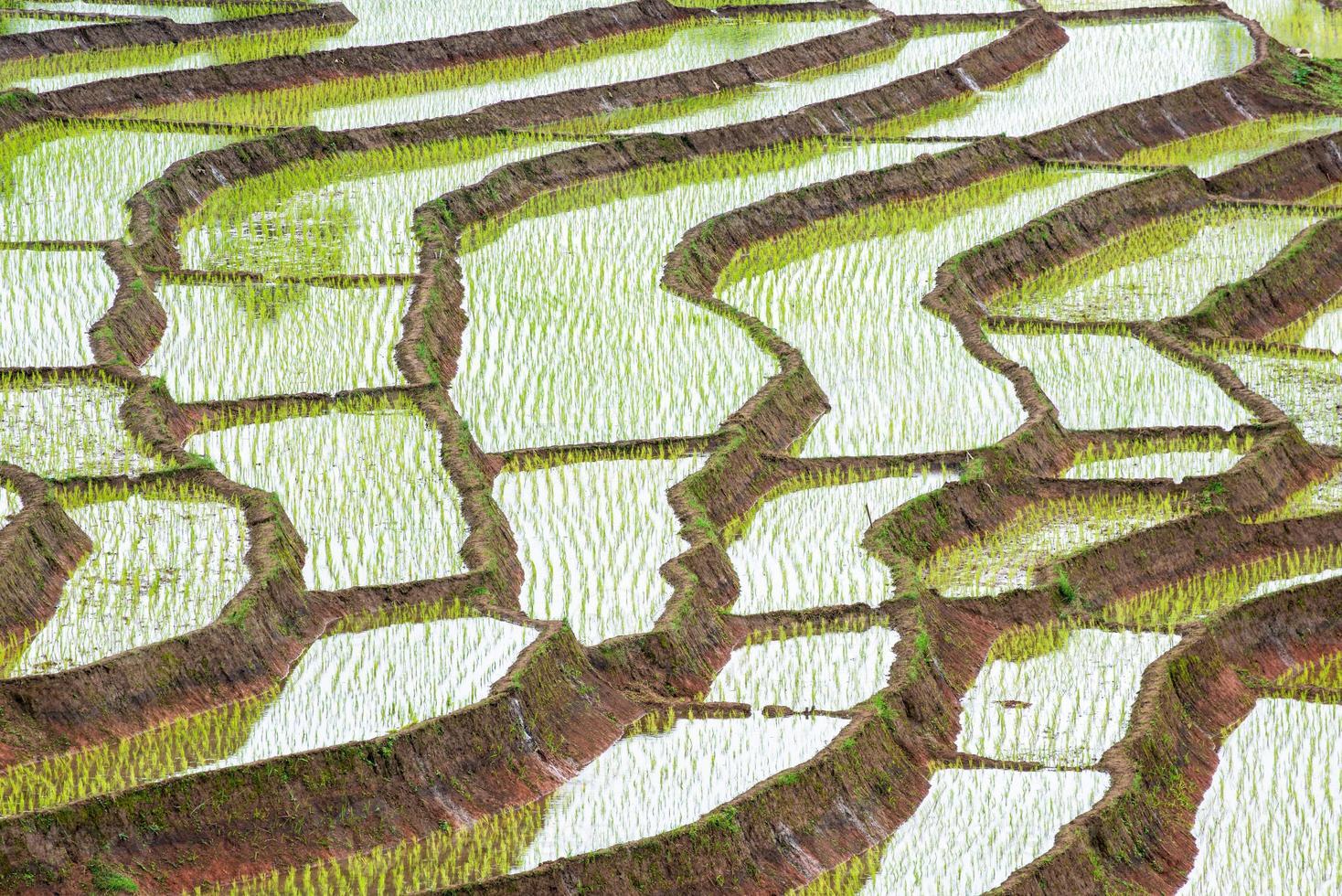 terrasvormig padieveld in het chiangmai noorden van Thailand foto