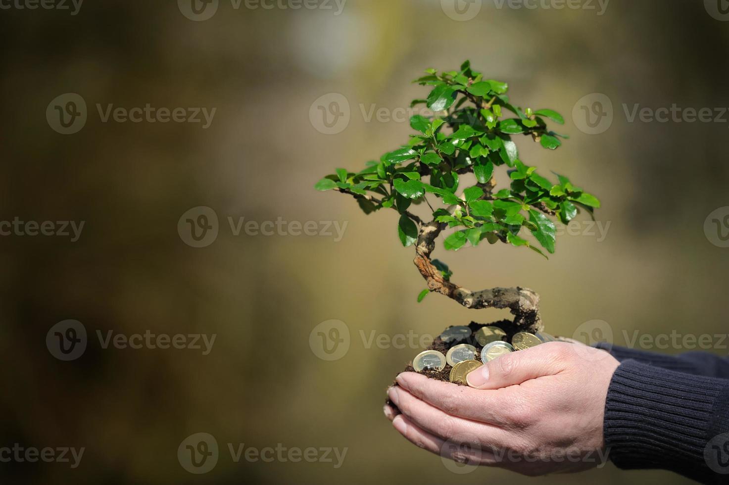 gevouwen handen vol geld met een boom die eruit ontspruit foto