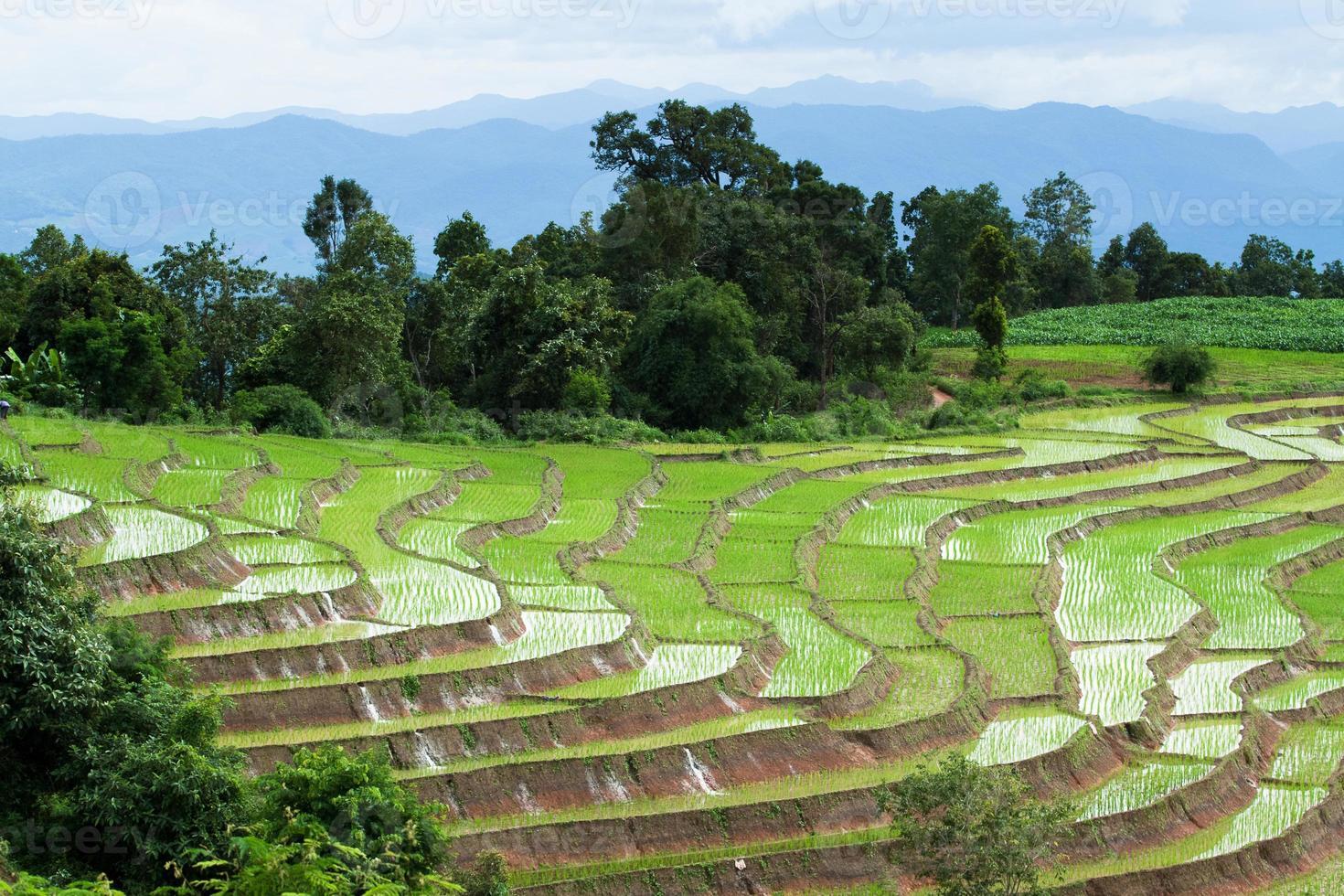 terrasvormig padieveld in chiangmai, Thailand foto